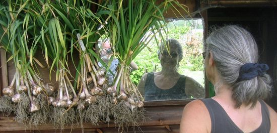 e40 garlic in june IMG_0503a